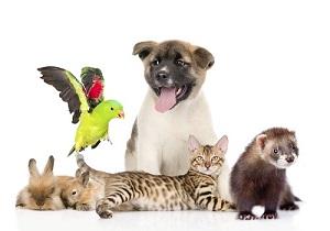 Правила содержания домашних животных в многоквартирных домах